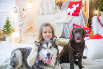 Cute girl having fun at home with a dog Malamute and Labradorat home in a decorated room