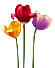 photo realistic raster tulips