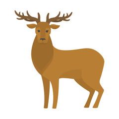 Deer with big antler. Elegant wild animal.