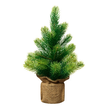 Bushy small green Christmas tree without decorations in a pot wrapped  isolated on white  background