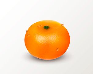 One citrus fruit mandarin or tangerine isolated on a white background. Realistic Vector Illustration