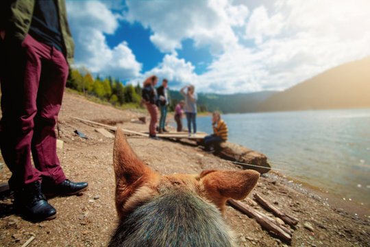 Dog getting attention from group of people, POV shot