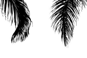 closeup palm leaves  - monochrome