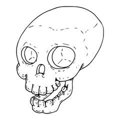 Human skull. Vector illustration of a human skull. Hand drawn human skull. Doodle skull.