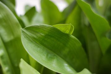 Leaf close up texture.
