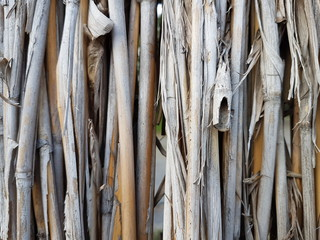 Dry bulrush wall background