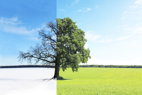 Abstract collage with mixed different sides of tree with changing seasons from summer with green grass and to winter with cold white snow