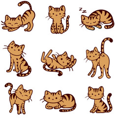 Vector illustrated Orange Tabby Cats