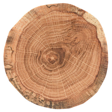 Piece of circular wood cross section with tree growth rings. Oak tree slice texture isolated on white background