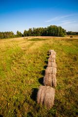 rolls of hay in green field under blue sky