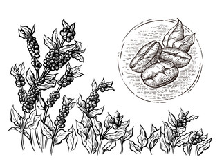 coffee plantation landscape and coffee bean macro in graphic style hand-drawn vector illustration.
