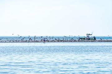 Kid skimming along sandbar flushing white pelicans