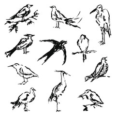 Set of sketchy silhouettes of birds