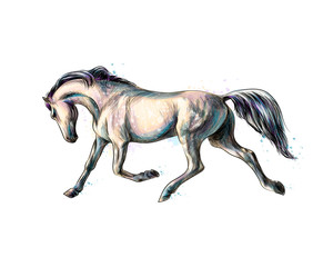 Horse run gallop from splash of watercolors. Hand drawn sketch