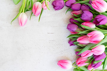 Pink and violet tulip flowers on light gray background with copy space