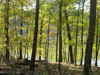 Autumn Trees at lake's edge