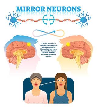 Mirror neurons vector illustration. Medical brain action explanation scheme