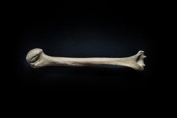 Humerus human bone close up isolated on black background