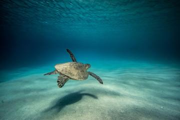 turtle solitude