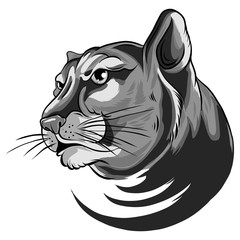 illustration of Cougar Panther Mascot Head Vector Graphic