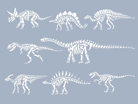 Set of dinosaurs fossils skeletons. Vector illustration