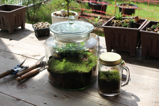clear glass jar of terrarium with moss and plant