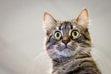 Large-Eyed Cat