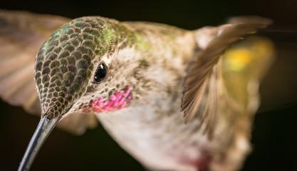 Hummingbird head shot