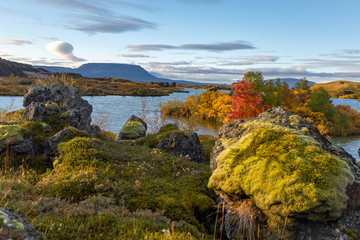 View of the autumn forest and the surface of the lake. Beautiful autumn landscape with water and bright vegetation. Iceland. Europe