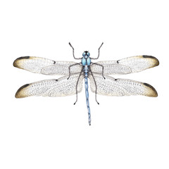 Watercolor realistic illustration of insects