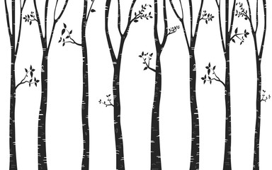 Silhouette  Tree Birch Background
