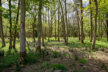 Dappled Wood