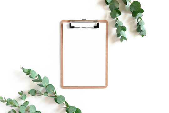 Clipboard and eucalyptus branches on a white background