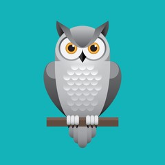 Cute white owl illustration on blue background.