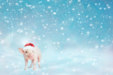 View of cute little pink piggy on winter snow background and looking at camera. Pig as symbol of luck and Chinese 2019 new year calendar. Animal wearing pink festive cap with white polka dots