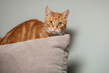 redhead cat sits on the back of a chair