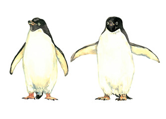 Penguins couple, holding wide wings and standing near, front view, isolated watercolor illustration
