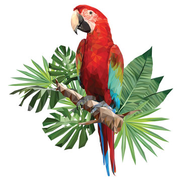 Illustration polygonal drawing of green wing macaw.