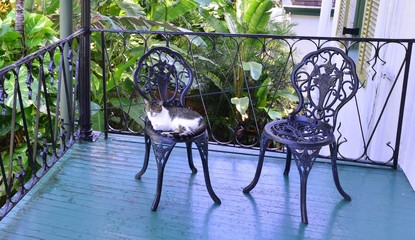 A cat resting on a wrought iron chair at the Florida Keys.