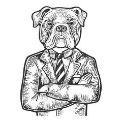 Bulldog head businessman engraving vector illustration. Scratch board style imitation. Black and white hand drawn image.