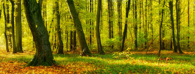 Natural Forest in Early Autumn Touched by the  Warm Light of the Morning Sun