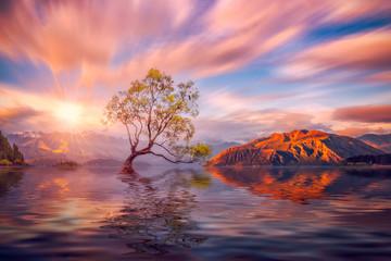 Keuken foto achterwand Zalm That Wanaka Tree at sunset Wanaka, NEW ZEALAND