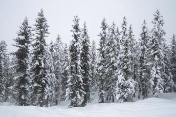 Pada śnieg - fototapety na wymiar