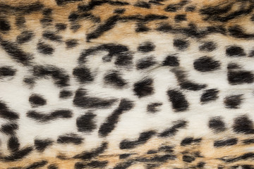 Natural animal fur background texture.  Wool spotted pattern close-up