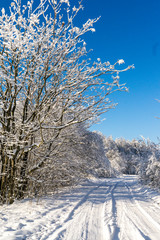 winter, snow, tree, landscape, cold, nature, forest, frost, sky, white, road, blue, trees, scene, ice, frozen, season, snowy, park, field, scenery, frosty, day, hoarfrost, wood