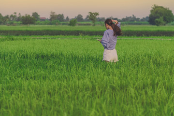 Back view of young woman take a photo by smartphone in the rice