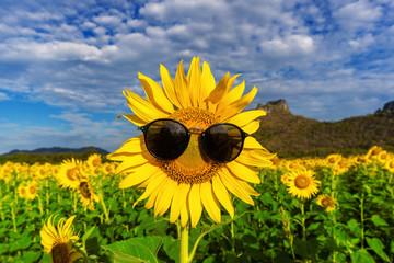 Wall Mural - sunflowers with sunglass