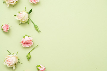 white roses layout background. scattered flowers on light green backdrop