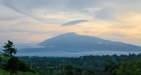 Spoed Fotobehang Bleke violet Scenic view of Mount Cameroon mountain with green forest during sunset, highest mountain in West Africa, Cameroon, Africa.