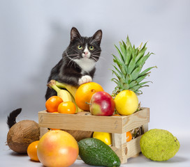 black and white cat guards a box with exotic fruit